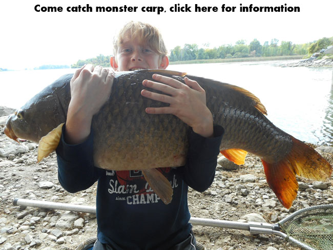 Montreal carp fishing guide
