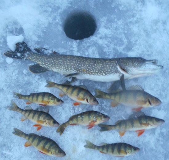 icecatch011520.jpg