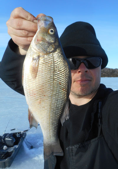 philwhiteperch0316203.jpg